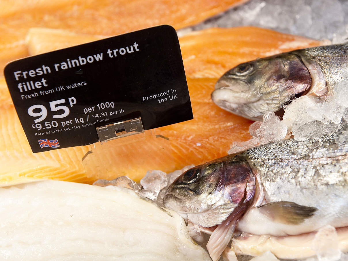 Fisch im Supermarkt © Richard Stonehouse / WWF