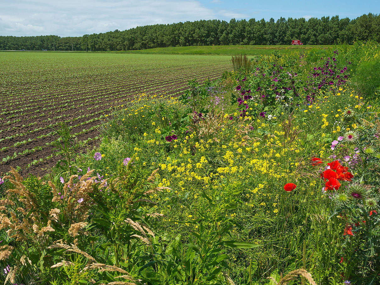 Acker mit Wildblumen © photonaj / iStock / Getty Images Plus