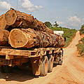 Holztransport © Clovis Miranda / WWF