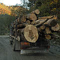 Holztransport in Rumänien © Wildwonders of Europe / Cornelia Doerr / WWF