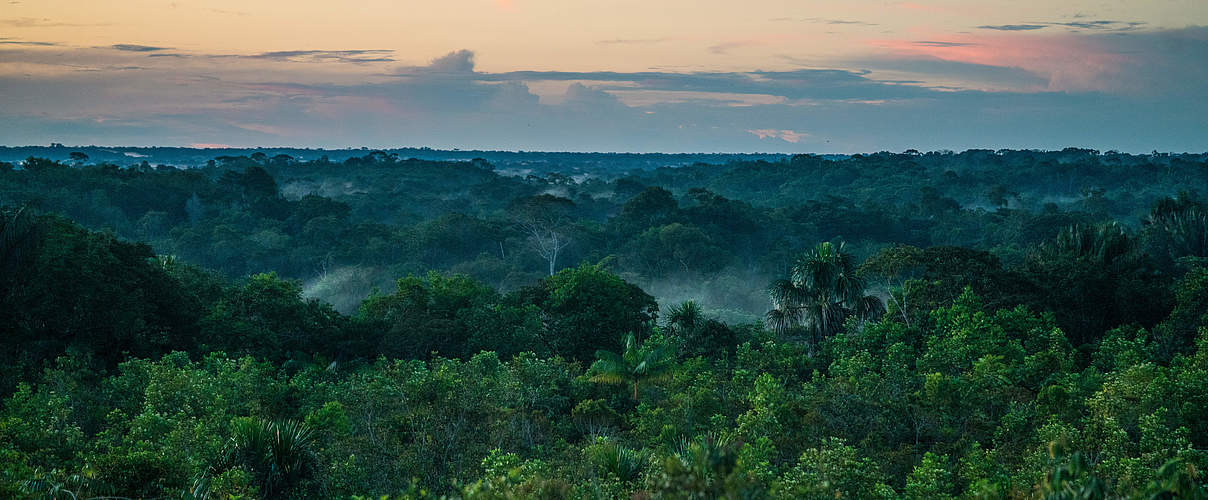 Amazonas Regenwald in Kolumbien © Luis Barreto / WWF-UK