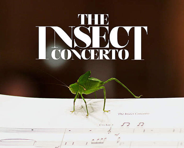 The Insect Concerto © Insect Concerto