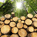 Gestapeltes Holz im Wald © catalby / iStock / Getty Images Plus