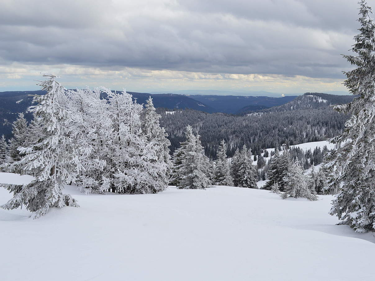 Feldberg im Winter © Mattias Rupp