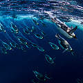 Tauchende Pinguine © National Geographic Creative Paul Nicklen WWF