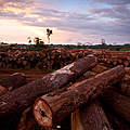 Holzlager © Brent Stirton / Getty Images / WWF-UK