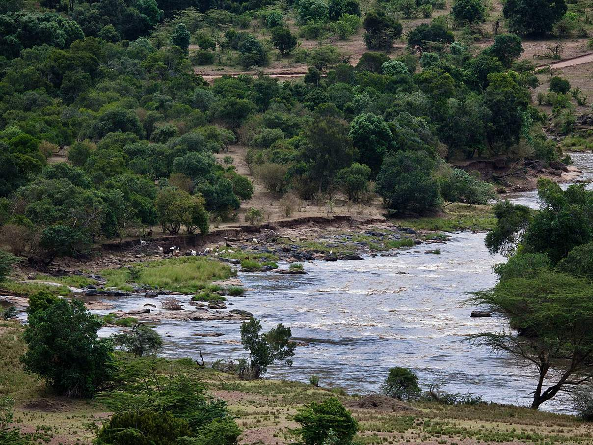 Der Mara Fluss in Kenia © Kate Holt / WWF UK