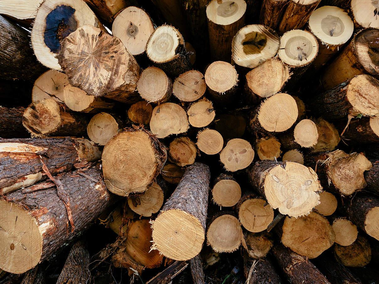 Handel mit illegalem Holz eindämmen