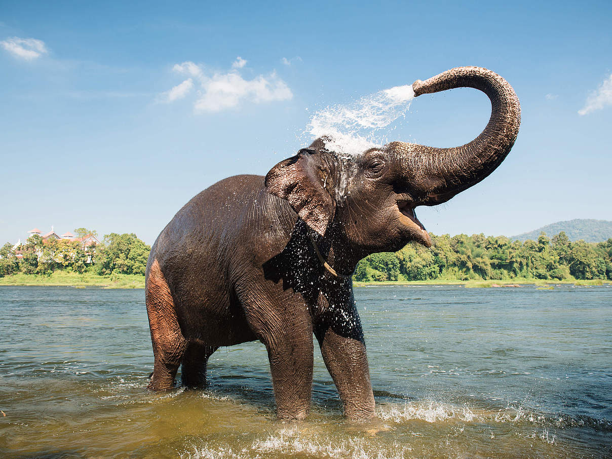 Elefant am Fluss in Kerala / Indien © Gilithuka / iStock / Getty Images