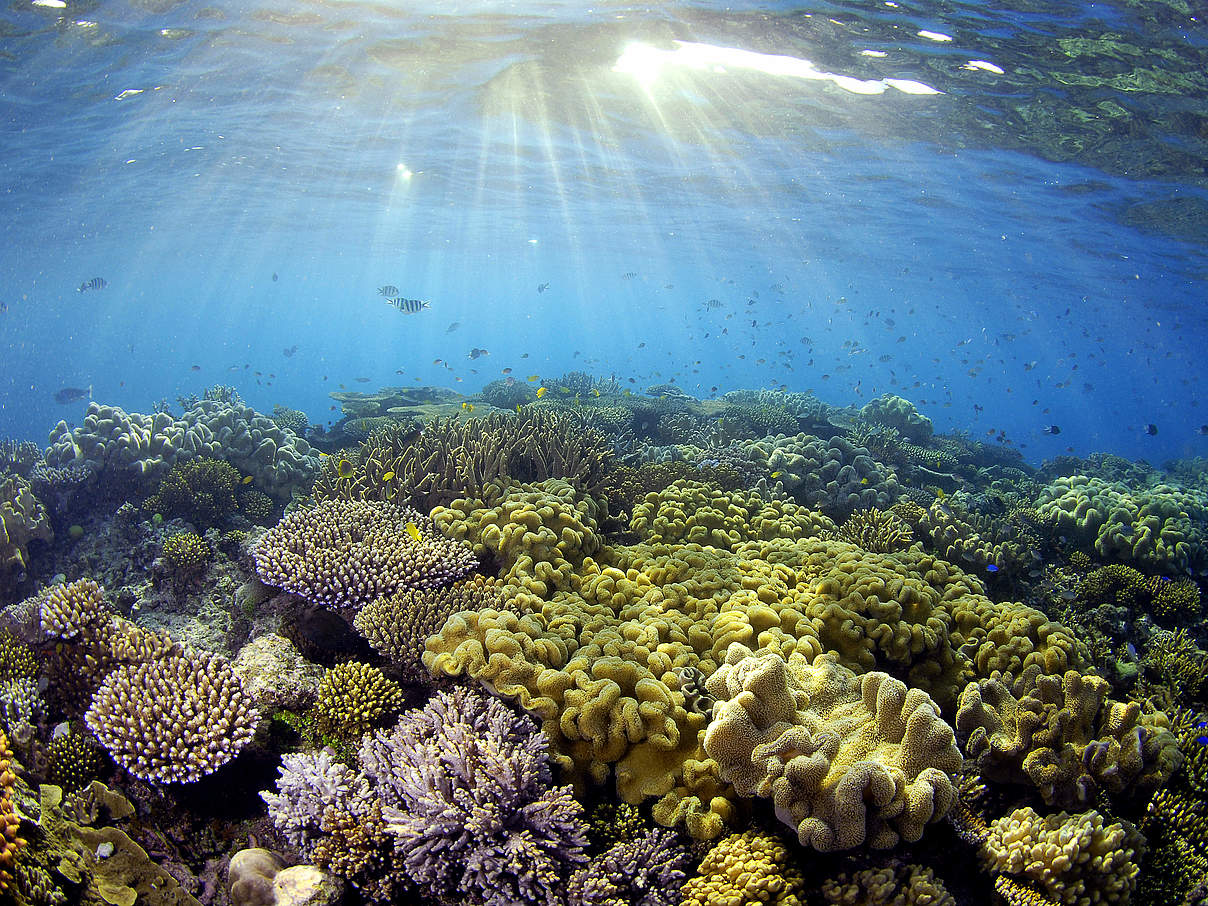 Korallen im Great Barrier Reef © Troy Mayne