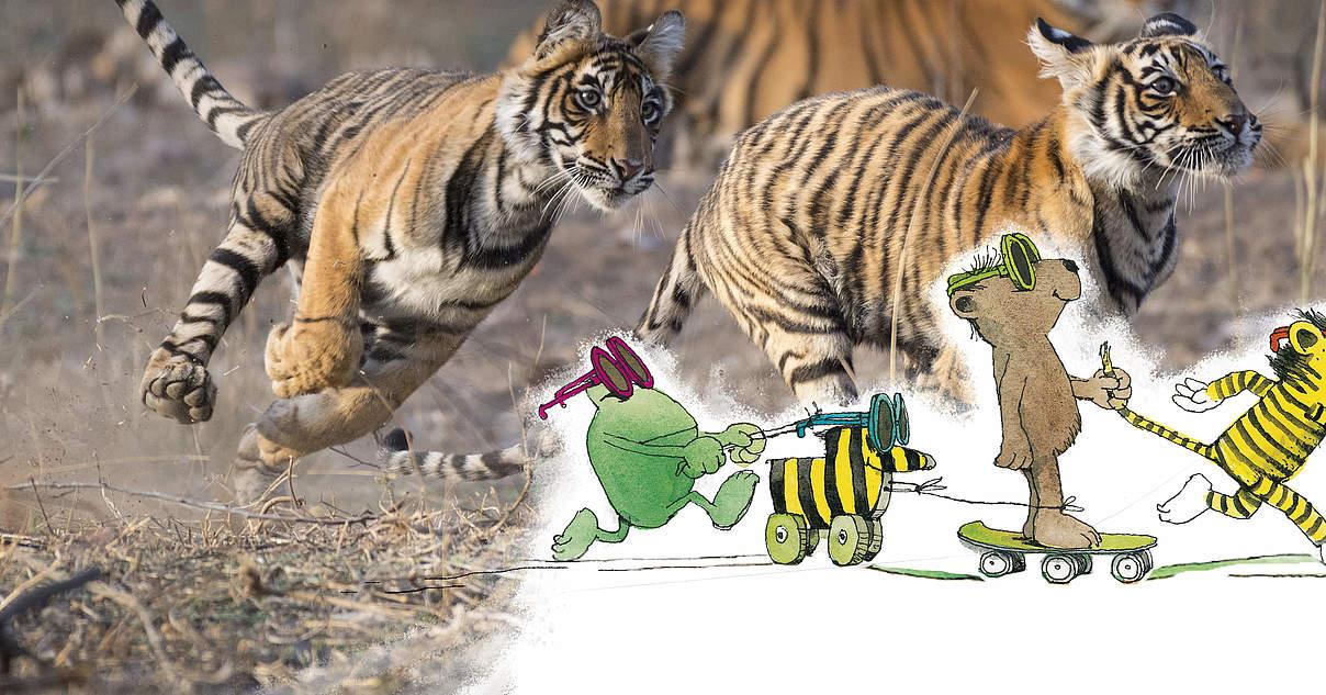 Mit der Tigerente für mehr Tigerschutz